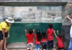 JAL水族館プログラム