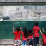 夏休みの自由研究にも使える!親子で参加できるJALの水族館プログラム