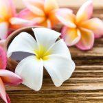 ハワイを代表する花の名前|ハワイ定番の花10種類の意味と花言葉