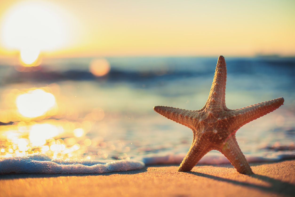 Sea Starfish on the beach at sunrise