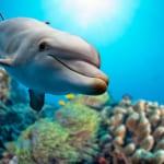 ハワイでイルカに出会える人気ツアー10選|おすすめのポイントや価格など