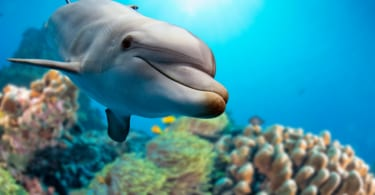 dolphin underwater on reef background