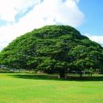 「この木なんの木気になる木」が4.5億の大金を生み出した話
