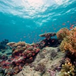 ハワイ島のサンゴ礁、半分以上が変色。理由は海洋温度の上昇、そして…