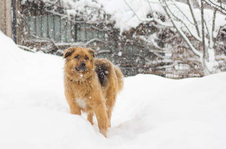 Cute big fluffy dog in the snow