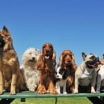 ホノルルで飼われている犬の名前ランキング一位は「ベラ」。一方日本は…