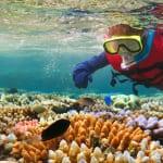 ハナウマ湾でシュノーケリングツアーを楽しもう!服装や持ち物、アクセス方法など