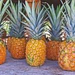 ドールプランテーションのおすすめの過ごし方|ハワイで本場のパイナップルや巨大迷路を楽しもう