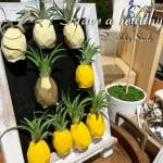 「パイナップルのエアプランツ」今日のハワイのお土産