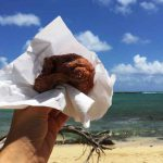 ハワイの名物グルメ、マラサダを食べるならこの5つの人気店・有名店へ